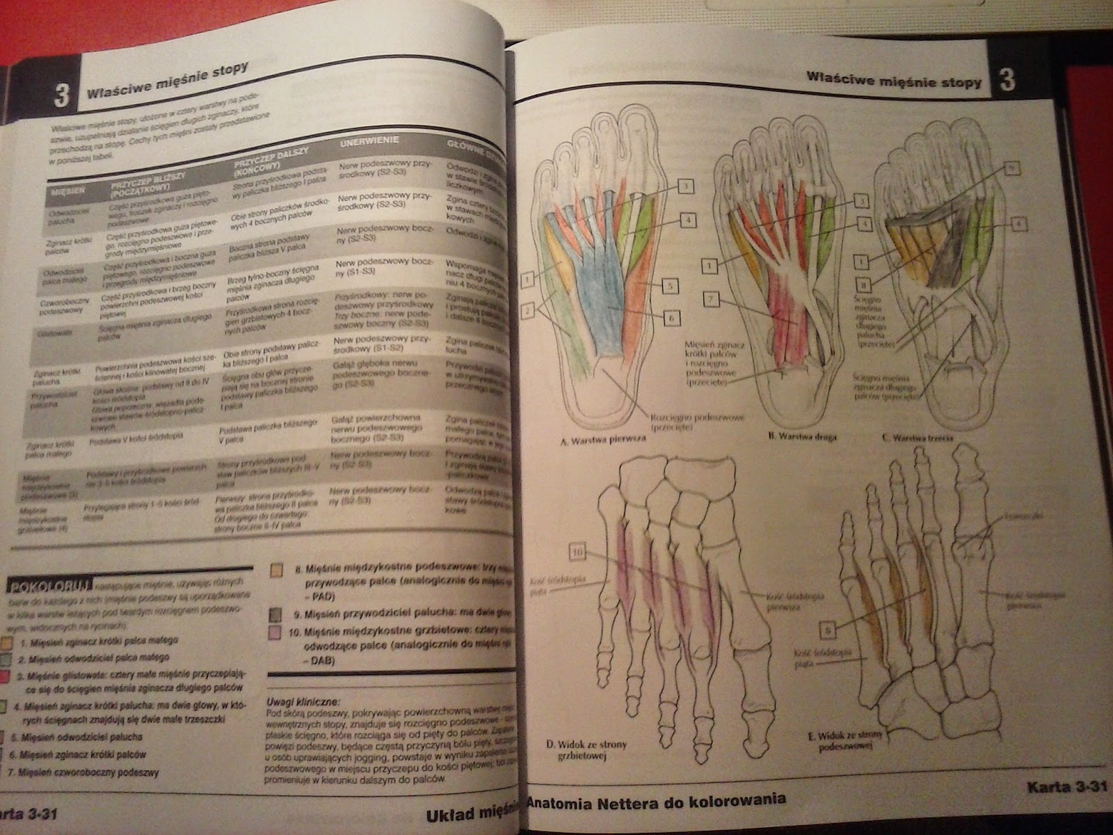 Anatomia Nettera do kolorwania